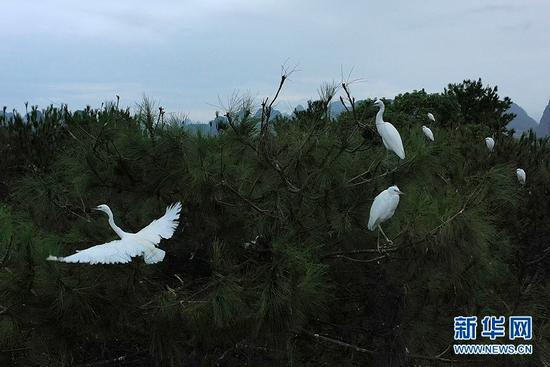 桂林:山水如画 白鹭翩翩