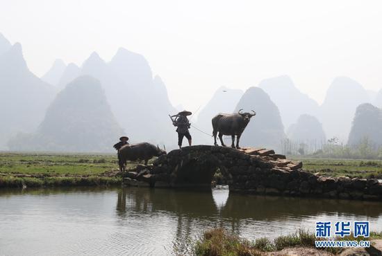 桂林:山水田园牧歌 四方游客慕名打卡