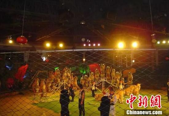 资料图:动物表演。来源:桂林雄森熊虎山庄官网
