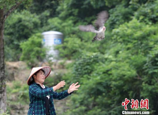 """图为5月17日,杨柳青和她养殖的""""飞鸡""""。 韦鼎标 摄"""