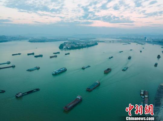 珠江黄金水道百舸争流 通讯员供图 摄