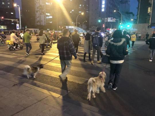 """街头仍有禁养犬出没 狗主人存侥幸""""按兵不动"""""""