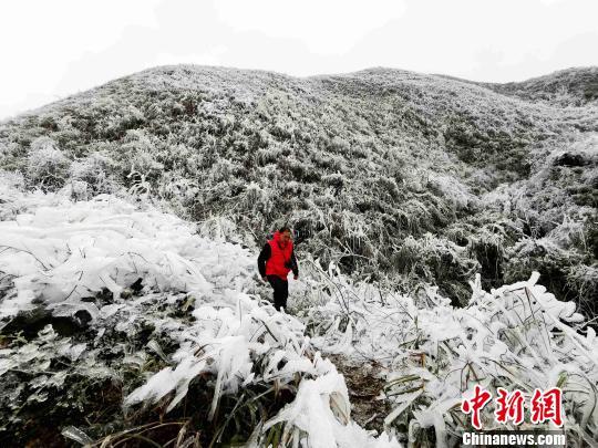 一名游客在环江县龙岩乡朝阁万亩草甸游玩 高东风 摄