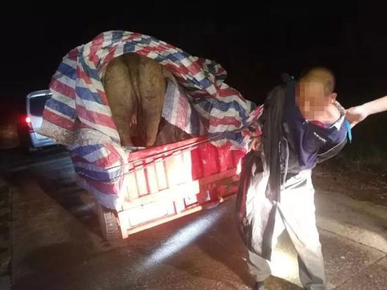 贵港:狱友结伙疯狂偷牛 被覃塘警方一锅端