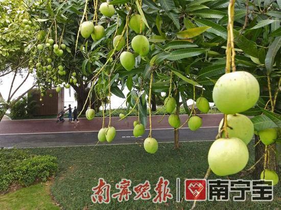 """又到了满城瓜果飘香的季节!""""绿城""""变身""""果城"""""""