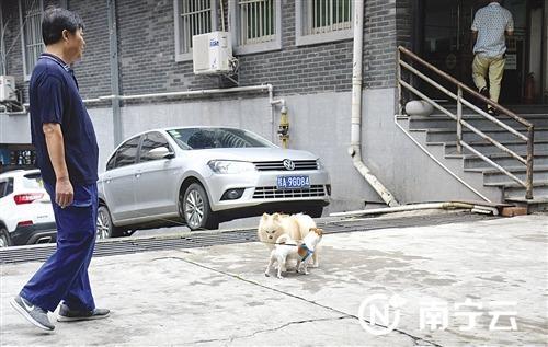 唐山路上,两只狗狗相遇。其中一只拴有狗绳,由主人牵着;另一只没有拴绳,也无人看管