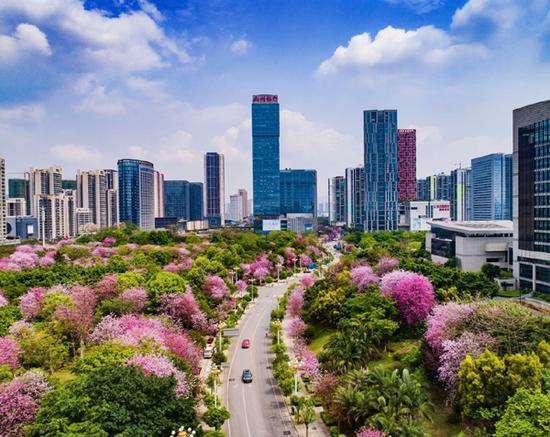 图为每年四月开满粉色紫荆花的柳州市区