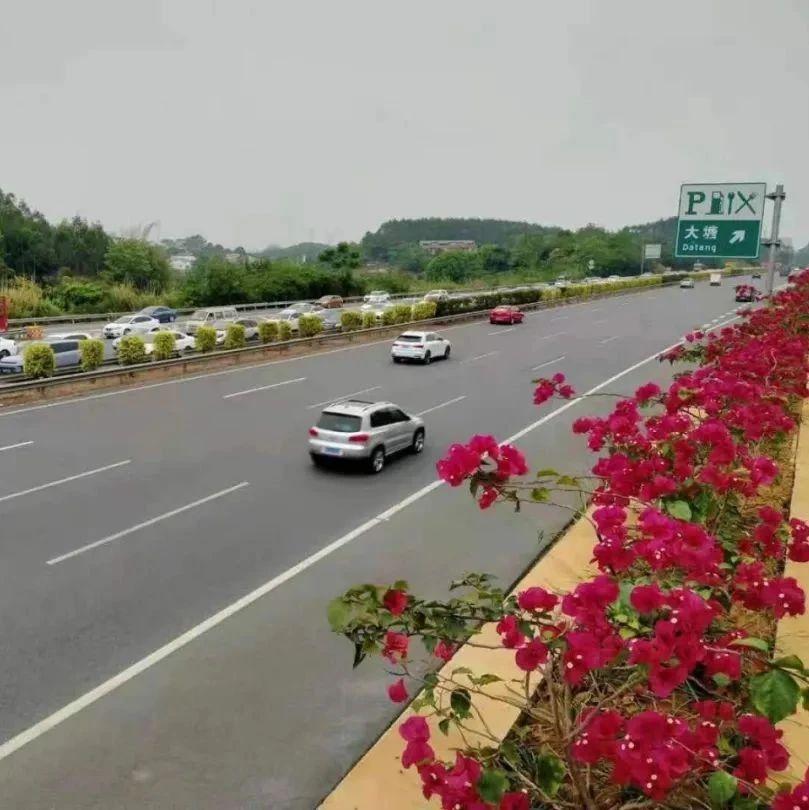 """""""三月三""""广西高速公路通行不免费 避免拥堵看这里"""