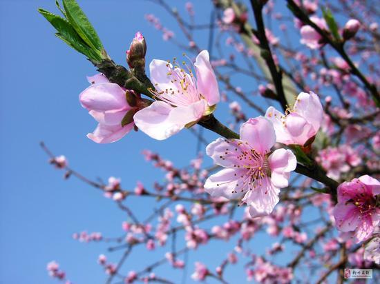 """柳州花开成海 但是这种""""花""""将柳州推向了世界"""