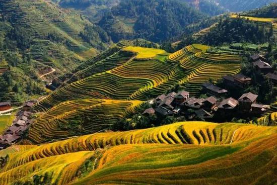 金秋时节,可以看到最美的龙胜梯田