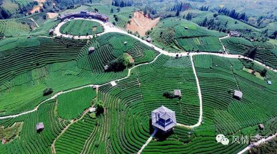到布央茶园呼吸一下新鲜空气,采采嫩绿的春茶
