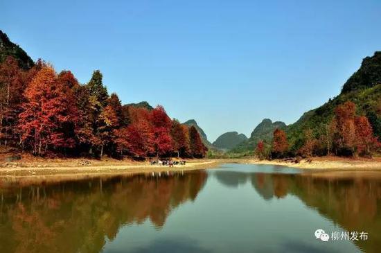 秋天的时候,到融安去看看枫叶