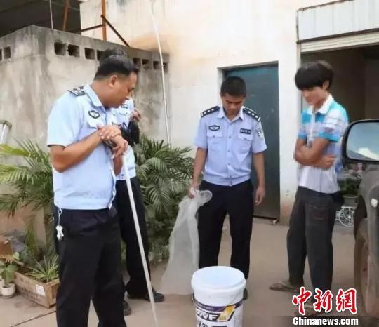 民警叮嘱吴某下次遇到家里进蛇,应及时报警求助,切勿盲目抓捕。钟欣摄