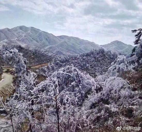 (图片来源广西日报柳州记者站官方微博@柳州观察)