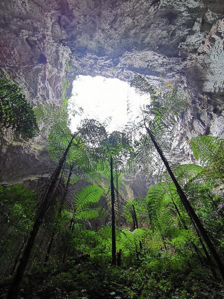 广西那坡县发现一大型天坑群 原始景观保存完好(图)