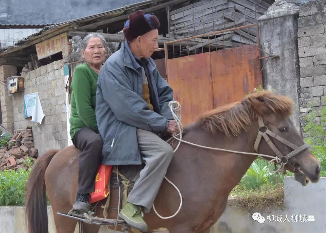 马背上的浪漫!柳州86岁老人骑马带老伴赶集(视频)
