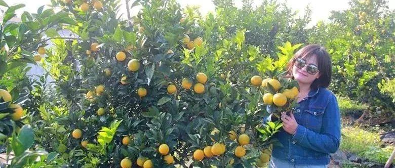 贵港此地600多亩蜜橙可采摘!园区还有动物和表演