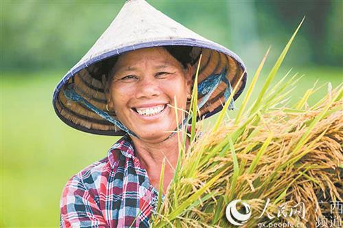 """图为当地农民正在收割""""海水稻""""。(罗伟/摄)"""