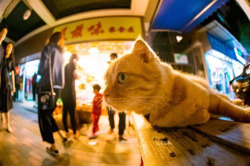 """广州骑楼过道里的""""街猫""""。受访者供图"""