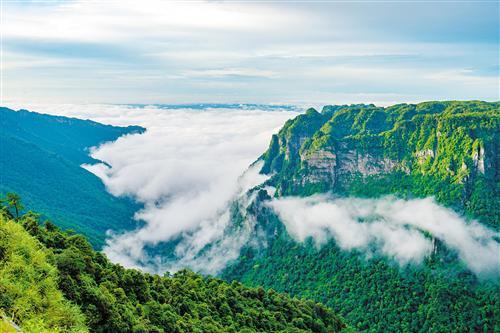 大明山橄榄大峡谷现云海景观。 (广西大明山国家级自然保护区管理局供图)