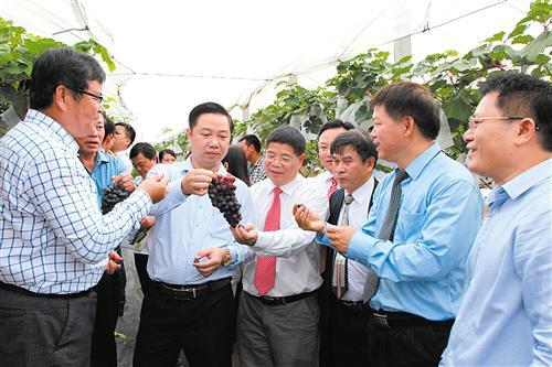 越南相关官员和技术员了解广西农科院的葡萄种植技术(广西农科院吕荣华供图)