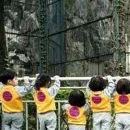 韩国近两千家幼儿园公款被挪用 园长购买名牌包