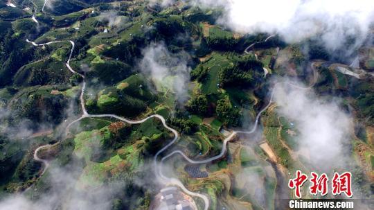 宛若仙境!航拍广西侗乡茶园薄雾缥缈景如画(图)
