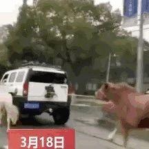 开着悍马遛宝马?这样的场面惊呆路人!(视频)