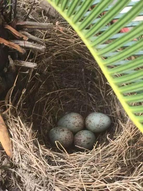 生出一到四枚蛋的时候