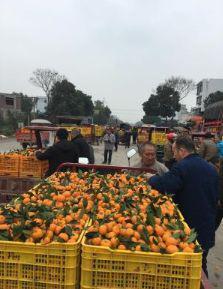 果农322国道边卖蜜桔
