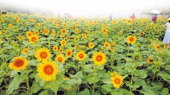 公园的美景、盛放的鲜花吸引了众多游客打卡