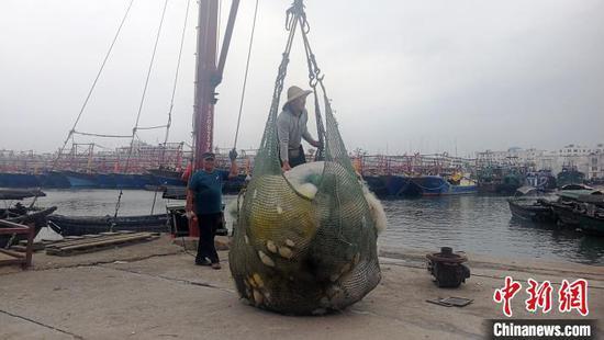 10月13日,渔民在收拾渔网 翟李强 摄
