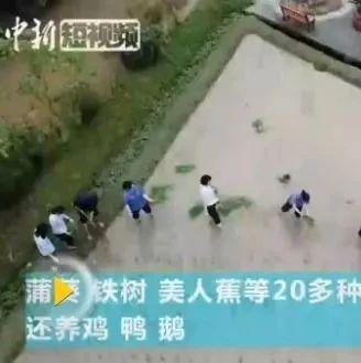 惊叹!8D魔幻重庆的楼顶:种菜、插秧、养鸡鸭