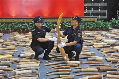 """缉私人员在清点""""1·17""""特大象牙走私案中查获的象牙。海关总署供图"""