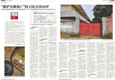 """2月18日,新京报刊发《""""救护失败死亡""""的130只穿山甲》报道。"""