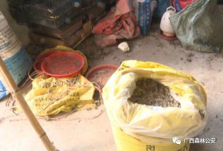 民警还在贝某家中搜出十多个鸟笼和一些捕鸟工具,冰箱内还有一些鸟类冻体。