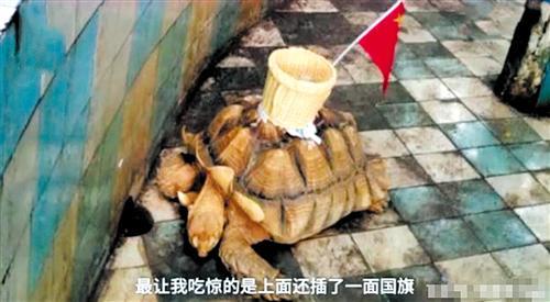 南宁动物园陆龟背被粘竹筐吸引游客投钱?园方回应