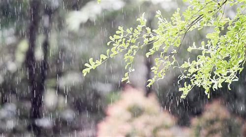 """谷雨来贺""""三月三"""" 南宁时有阵雨光顾出门记得带伞"""