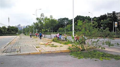 园林绿化工人正在清理处置倒伏的树木。通讯员 施秋英 摄