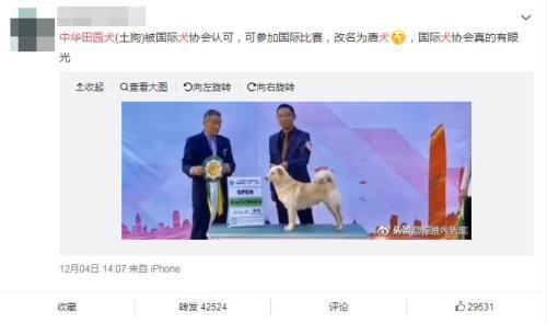 中华田园犬更名为唐犬?主办方辟谣:不能划等号