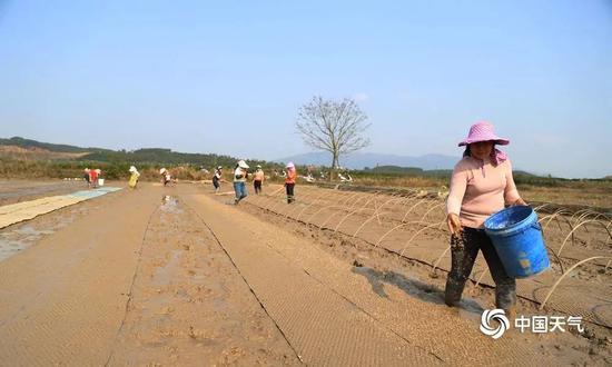 12日,象州县天晴,寺村镇上山村委大士会村的农友们在田间播种。(摄影:吴永才)
