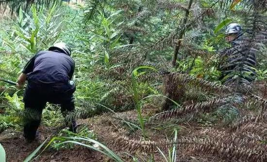 ▲ 重点搜查容易藏身的草丛、树林和村内闲置房等