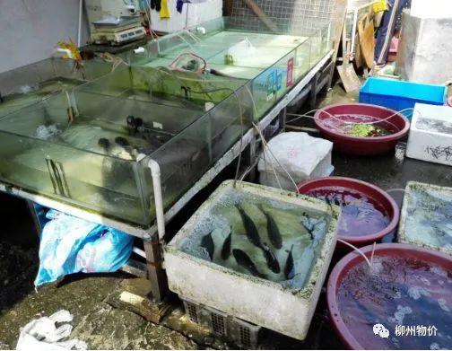 买一斤三文鱼少四两多 柳州这些摊位缺斤少两被曝光