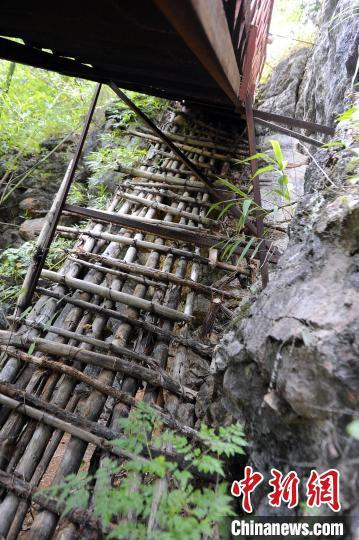 断崖木梯求学路已成历史,虽然后来当地政府用钢板又修了一座梯子,但现在也废弃了。 蒋雪林 摄