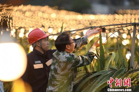 夜里,供电人到果园了解火龙果生长情况。 钟欣 摄