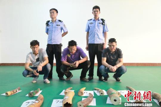 图为犯罪嫌疑人指认涉案象牙 桂关宣 摄