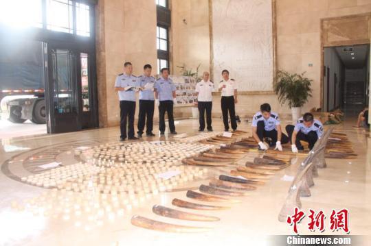 南宁海关展示查获的象牙等濒危物种及其制品。南宁海关供图