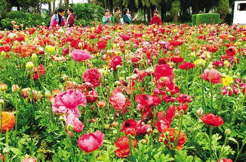 花圃中万紫千红