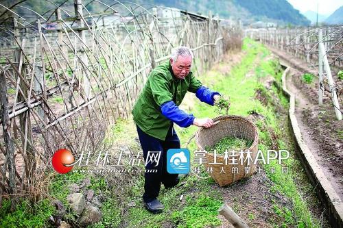 陈登銮根据几十年积累的经验,能辨认上千种草药。他说,他给老伴用了500多种草药。