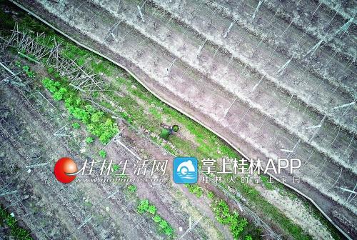 陈登銮在田间地头采草药。他说,其实很多草药就在身边,善于用起来,就是宝贝。